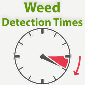 How Long Will Weed Stay In Your System For A Drug Test?